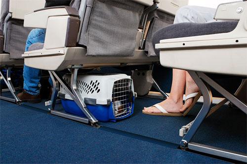 Como funciona o transporte de animais pela LATAM