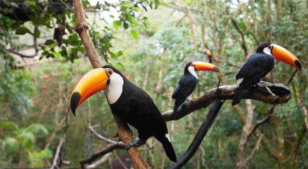 Parque das Aves em Foz do Iguaçu